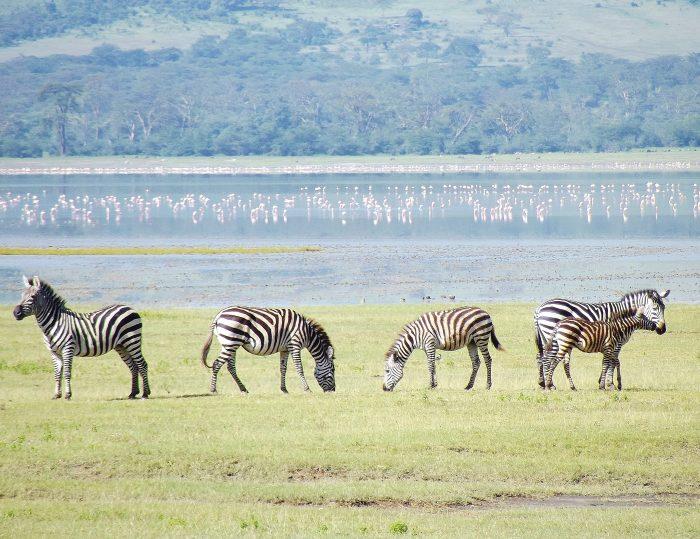 Ngorongoro Crater- Your Next Big Trip