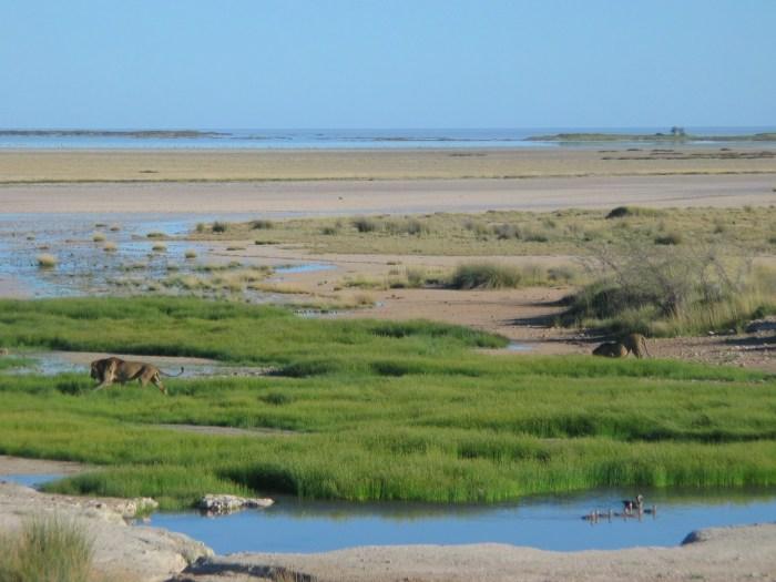 Best places African Safari