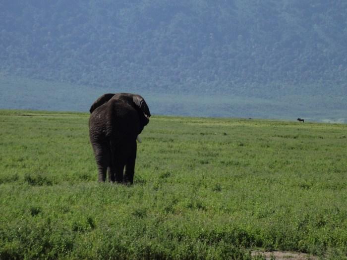 Where to go african safari