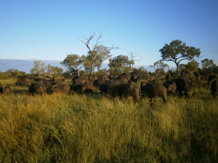 Best Safari Off the Beaten Track