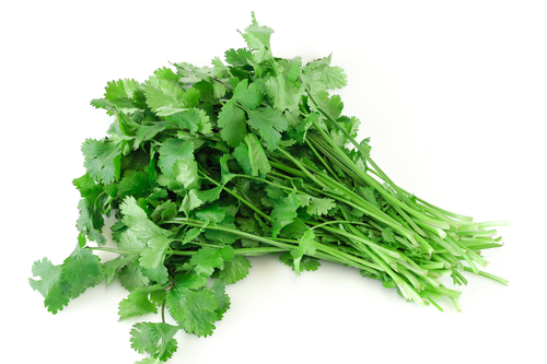 How Cilantro Helps Rid your Body of Mercury