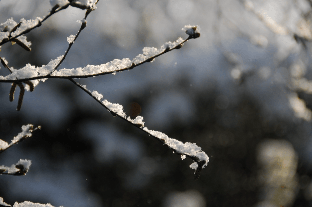 Top Tips For Autumn And Winter Gardening