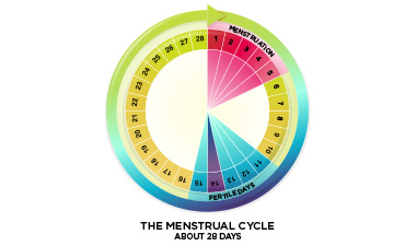 menstrual cycle diagram with ovulation marine dual battery switch wiring basics your period menstruation is the technical term for getting about once a month females who have gone through puberty will experience bleeding