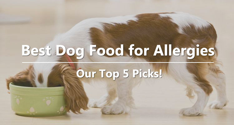 Best Dog Food for Allergies – Our Top 5 Picks!