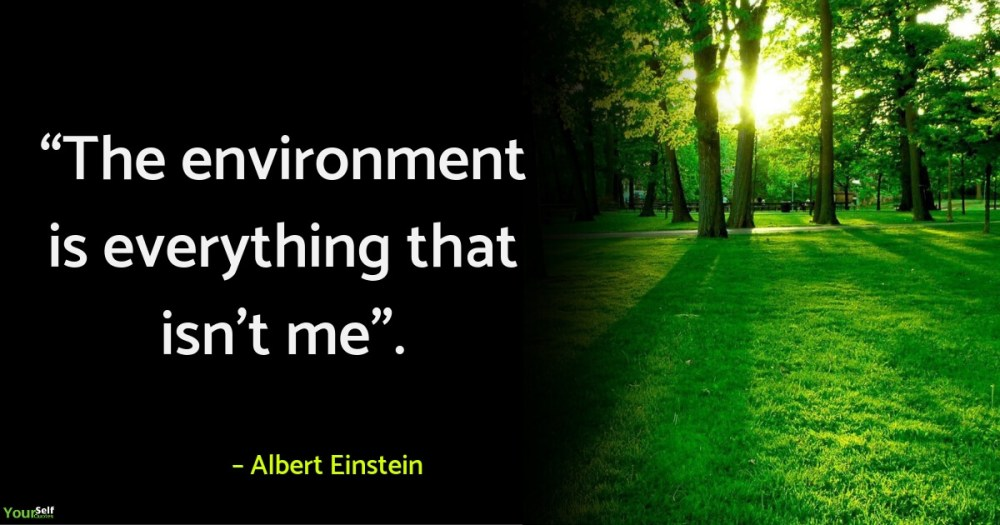 Environment Quotes by Albert Einstein
