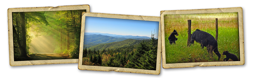 SmokyMountainVacationCabinScenery