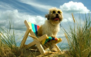 lovely dog friendly beaches