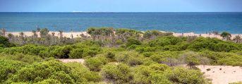 Veja Baja Guardamar