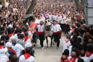 Wine horse race