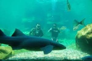 Aqua Natura Sea lion