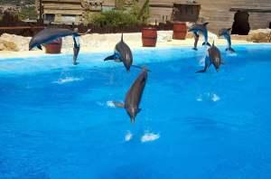 Mundomar Dolphins