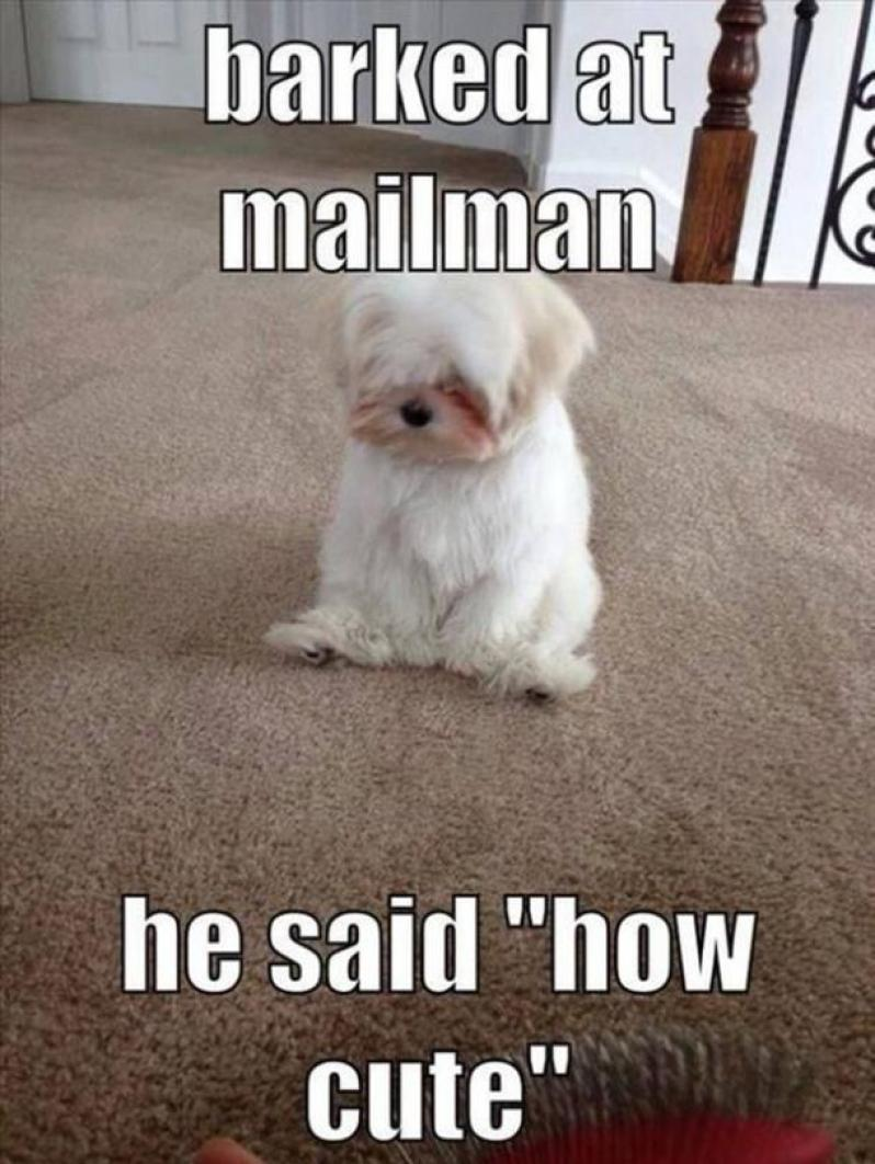 50 Best Funny Dog Memes For National Dog Day   YourTango
