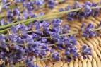 lavender-730740_1920