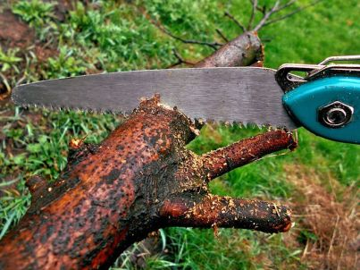 hiring a tree