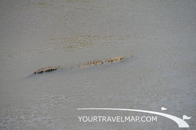 Costa Rica|Fotos cocodrilos en el Río Tarcoles