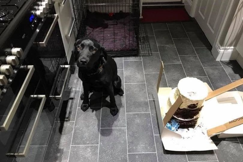 dog wedding cake