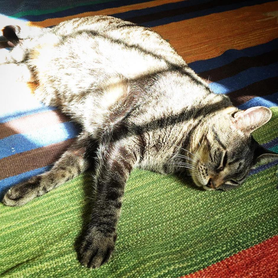 Cosette is always working on her tan.