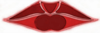 Lippeneinteilung