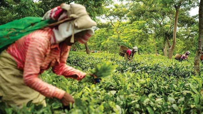 Coffee and Tea Plantations kerala