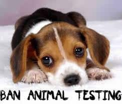 Is Animal Testing the same thing as Animal Cruelty?