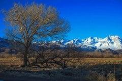 to field in the sierra photo