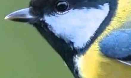 Composition électroacoustique à partir de chants d'oiseaux avec Bernard Fort
