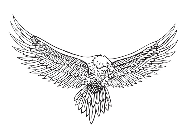 Eagle Line Drawing Vector material_Download free vector,3d