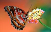 Kozadan Çıkan Kelebeğin Muhteşem Anı