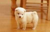 puppy-12