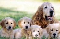 Anne Köpeğin İnanılmaz Mutluluğu