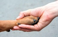 hand-holding-paw-web