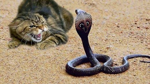 en cesur kediler