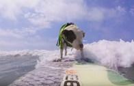 Sörf Uzmanı Köpek!