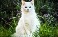 Ölen Sahibinden Ayrılmak İstemeyen Vefalı Kedi!