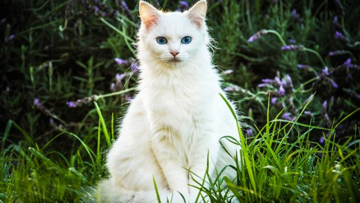 ölen sahibinin başından ayrılmayan kedi