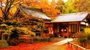 Japonya'nın Eşsiz Sonbahar Güzelliği
