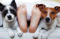 Sahibi ile Uyumak İçin Can Atan Köpekler