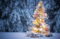 Aralıktan Dikkat Çekenler