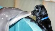Köpeklerle Öpüşen Yunuslar