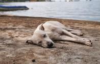 Kalbi Kırık Evsiz Köpeği Kurtarmak