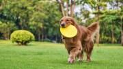 Garip ve Komik Sesler Çıkaran Köpek