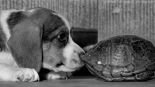 kaplumbağadan korkan köpek
