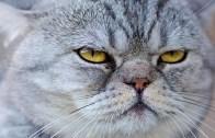 Kedi Olmak Yaramazlık Gerektirir!