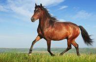Kaçan Atını Bakın Nasıl Yakaladı!