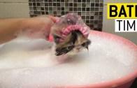 Banyodayken Şirinliğin Zirvesindeki Evcil Hayvanlar