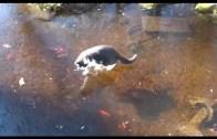 Donmuş Gölet Üstünde Balık Avlamaya Çalışan Kediler
