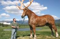 Sevimlilik Şampiyonu Hayvanlar