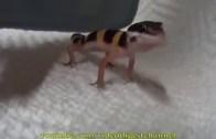 İnsan Gibi Ses Çıkaran Bu Hayvanlar Çok Komik