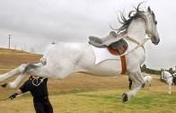 Böyle Olur Atın İntikamı