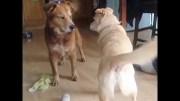Çok Komik Bitirim Köpekler